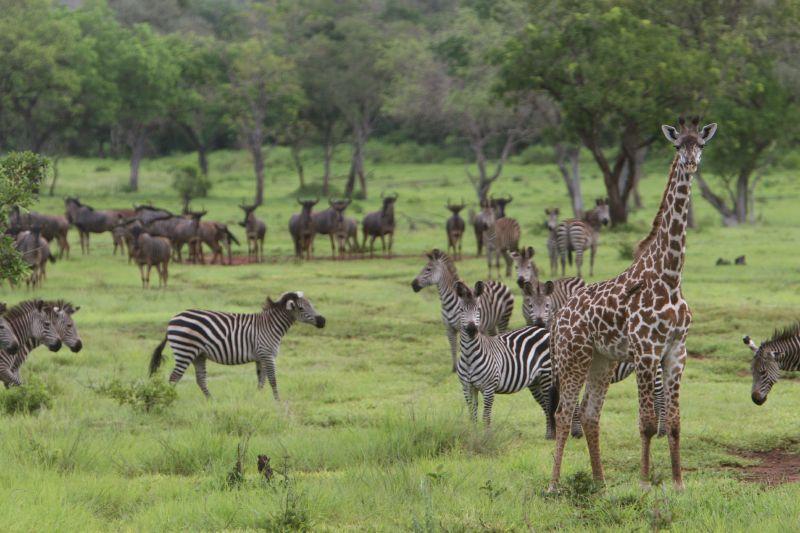 bezienswaardigheden Tanzania