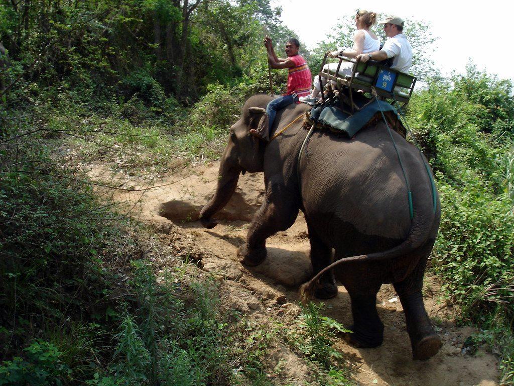 olifantenrit
